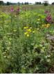 Semínková směs Bylinková vonička 10g