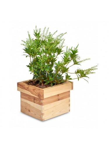 ČistéDřevo Dřevěný čtvercový květináč 20 x 20 x 15 cm