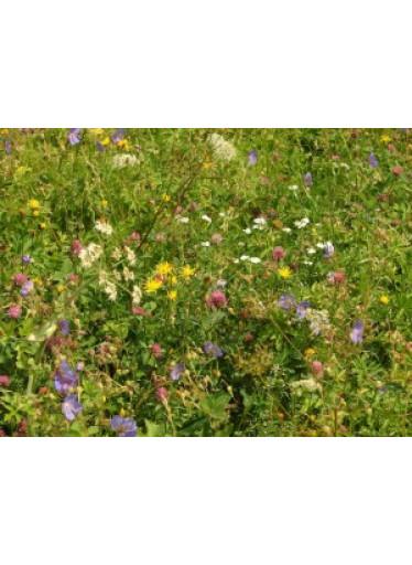 Semínková směs Zahradní loučka 10g