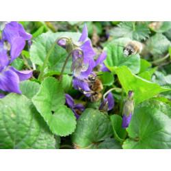 Včelky samotářky a další užitečný hmyz