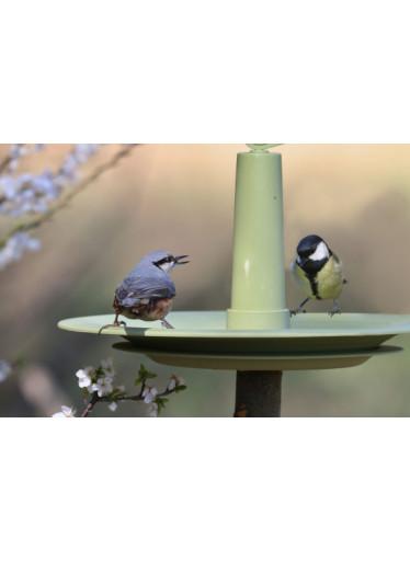 Plastia Pítko pro ptáky Finch, zelené